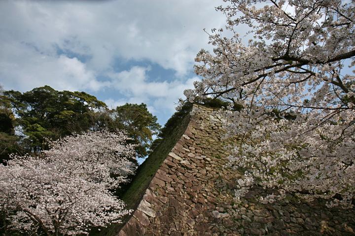 20090323-sakura-004.jpg